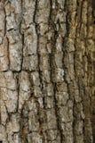 Textura de madeira com testes padrões naturais, painéis velhos do fundo, Fotografia de Stock Royalty Free