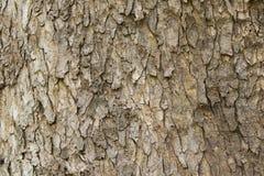 Textura de madeira com testes padrões naturais, painéis velhos do fundo, Imagem de Stock Royalty Free