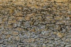 Textura de madeira com testes padrões naturais, painéis velhos do fundo, o b Foto de Stock