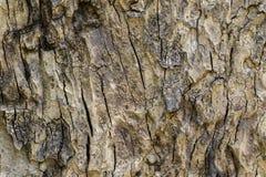 Textura de madeira com testes padrões naturais, painéis velhos do fundo, o b Fotografia de Stock