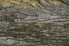 Textura de madeira com testes padrões naturais, painéis velhos do fundo, o b Fotos de Stock