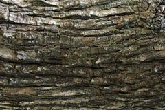 Textura de madeira com testes padrões naturais, painéis velhos do fundo, o b Imagens de Stock
