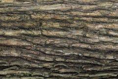 Textura de madeira com testes padrões naturais, painéis velhos do fundo, o b Imagem de Stock