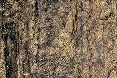 Textura de madeira com verão Unpainted da textura da areia imagem de stock royalty free
