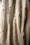 A textura de madeira da árvore enorme natural enraíza Fotos de Stock Royalty Free