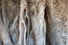 Textura de madeira da casca Imagens de Stock