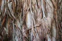 Textura de madeira da casca Fotografia de Stock