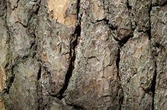 Textura de madeira da casca Fotos de Stock Royalty Free