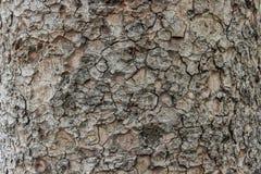 Textura de madeira da casca Foto de Stock