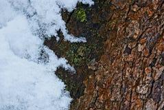Textura de madeira da casca e da neve de árvore Imagem de Stock Royalty Free