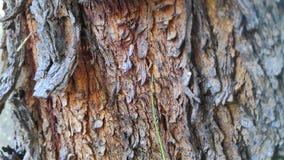 Textura de madeira da casca foto de stock royalty free