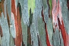 Textura de madeira da cor Foto de Stock