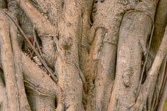 textura de madeira da textura do café do trilho do árbol foto de stock