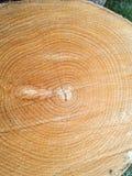 Textura de madeira da faia do corte do macro fotografia de stock