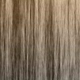 Textura de madeira da grão Imagens de Stock