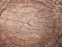 Textura de madeira da grão do coto de árvore velho com quebras no tom marrom f Fotos de Stock