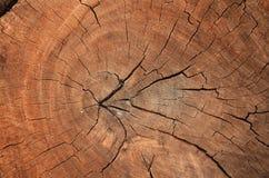 Textura de madeira da grão do coto de árvore velho com quebras no tom marrom f Fotos de Stock Royalty Free