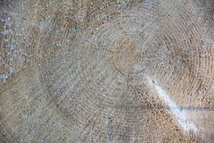 Textura de madeira da madeira serrada da árvore Fotos de Stock Royalty Free