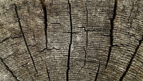 Textura de madeira de seção transversal áspera velha para o fundo Fotos de Stock Royalty Free