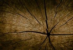 Textura de madeira do corte foto de stock