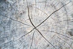 Textura de madeira do coto foto de stock royalty free