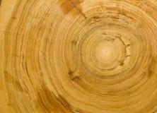 Textura de madeira do fundo da grão Imagens de Stock Royalty Free