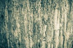 Textura de madeira do jati com cor preto e branco o java central recolhido foto de stock royalty free