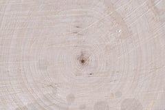 Textura de madeira do núcleo imagens de stock royalty free