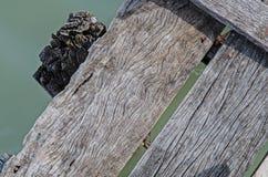 Textura de madeira do porto local Imagens de Stock Royalty Free