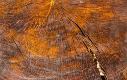 Textura de madeira do teste padrão do Grunge Foto de Stock