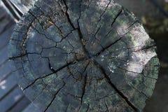 Textura de madeira do tronco de árvore cortado, close-up fotografia de stock royalty free
