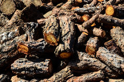 Textura de madeira do tronco de Cutted Foto de Stock Royalty Free