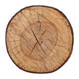 Textura de madeira do vetor cutted do tronco de árvore Foto de Stock
