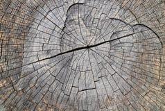 Textura de madeira dura seca natural monocromática foto de stock