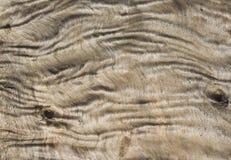 Textura de madeira enrugada Fotos de Stock