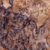 Textura de madeira exótica Fotografia de Stock