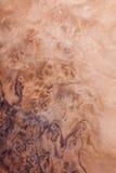 Textura de madeira, foto conservada em estoque, árvore velha do fundo Imagem de Stock
