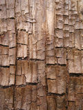 Textura de madeira fresca da casca de Grunge foto de stock royalty free