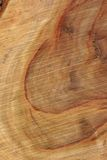 Textura de madeira: Louro da cânfora Foto de Stock Royalty Free