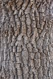 Textura de madeira natural escura imagem de stock