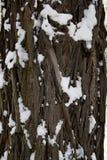 Textura de madeira nevado da casca fotografia de stock