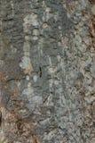 Textura de madeira para a textura do fundo fotografia de stock