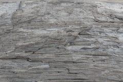 Textura de madeira Placa cinzenta da madeira com linhas resistidas da quebra Fundo natural para o projeto chique gasto Assoalho d Fotos de Stock