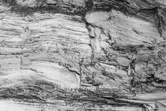 Textura de madeira Placa cinzenta da madeira com linhas resistidas da quebra Fundo natural para o projeto chique gasto Assoalho d Imagem de Stock