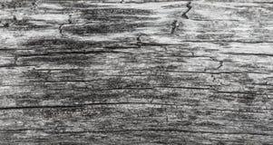 Textura de madeira Placa cinzenta da madeira com linhas resistidas da quebra Fundo natural para o projeto chique gasto Assoalho d Fotografia de Stock Royalty Free