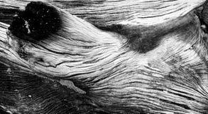 Textura de madeira queimada Fotografia de Stock Royalty Free