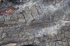 Textura de madeira queimada Imagens de Stock