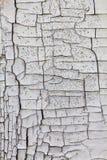 Textura de madeira rachada Fotos de Stock Royalty Free