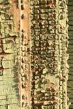 Textura de madeira rachada velha Foto de Stock Royalty Free