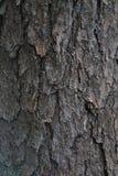 Textura de madeira real Foto de Stock Royalty Free